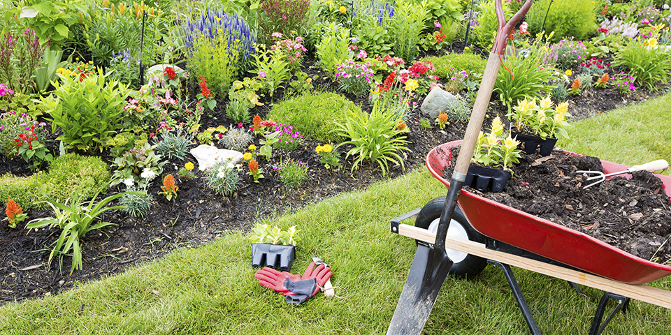Preparing Your Backyard Garden